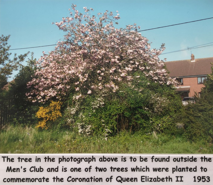 mens club tree image